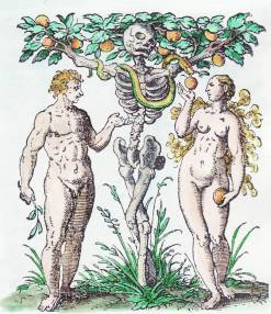 Woodcut By Jost Amman From Jacob Rueff De Conceptu Et Generatione Hominis 1587