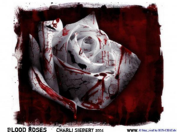 Bloody Rose White Red