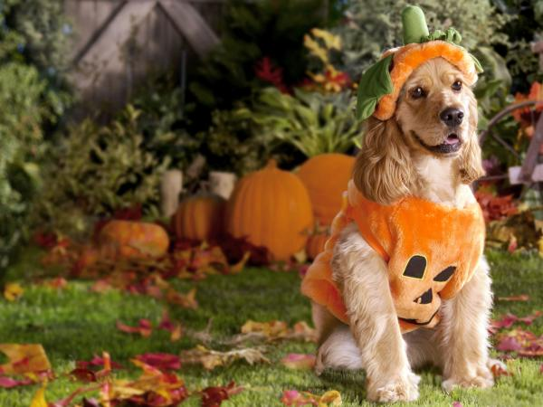 Happy Halloween With Dog